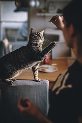 THEMENBILD - eine getigerte Hauskatze spielt mit einem Stück Schinken mit einer Jugendlichen , aufgenommen am 27. März 2020, Oesterreich // a tabby house cat playing with a piece of ham with a young woman, Austria on 2020/03/27. EXPA Pictures © 2020, PhotoCredit: EXPA/ JFK