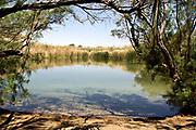 Israel, Judea Desert, Einot Zokim (Ein feshcha) a blooming desert oasis on the shore of the Dead Sea