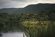 Bush and Rakeahua River, The Southern Circuit, Stewart Island / Rakiura, New Zealand Ⓒ Davis Ulands | davisulands.com