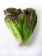 Fresh whole Mini Cos Lettuce
