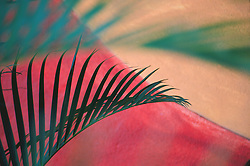 North America, Mexcio, Puerto Vallarta, fern against painted wall