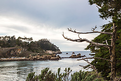 Whaler's Cove, Point Lobos State Park