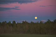 Harvest moon and agricultural landscape with young birch stands in back in late evening in autumn, Vidzeme, Latvia Ⓒ Davis Ulands | davisulands.com