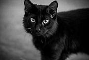 stray cat, Pasadena, California