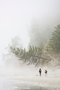 Two backpackers hike through heavy mist along the North Coast, between Chilean and Norwegian Memorial, in Olympic National Park, Washington.
