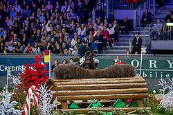Strokar Teresa, SUI, Arina M<br /> CHI Genève 2019<br /> © Hippo Foto - Dirk Caremans<br />  13/12/2019