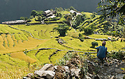"""A farmer contemplates rice terraces near Kimche, along the trail to Annapurna Sanctuary in Nepal, Asia. In Nepal, humans have worked the land for thousands of years by stripping forests for firewood, terracing fields for agriculture (to grow grains, rice, potatoes, etc), and grazing yaks as high as 15,000 feet elevation. Farmers work every patch of arable land to support a dense population of people, who often push aside or destroy native species. Published in """"Light Travel: Photography on the Go"""" book by Tom Dempsey 2009, 2010."""