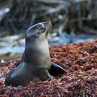 Cooper Bay<br />South Georgia<br />United Kingdom Overseas Territory<br />A Subantarctic Island in the Southern Ocean