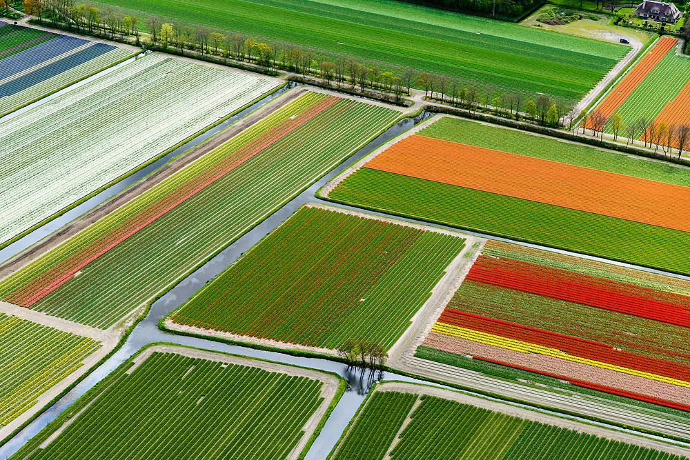 Nederland, Zuid-Holland, Noordwijkerhout, 28-04-2017; bollenstreek, verkaveling van bollenveld in het voorjaar, de bollen bloeien nog net niet.<br /> Allotment of bulb field in the spring, the flowers just barely bloom.<br /> luchtfoto (toeslag op standard tarieven);<br /> aerial photo (additional fee required);<br /> copyright foto/photo Siebe Swart