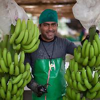Danny Carranza Huamán, is a specialist in recieving bananas at a BOS banana processing plant in Salitral, Peru.