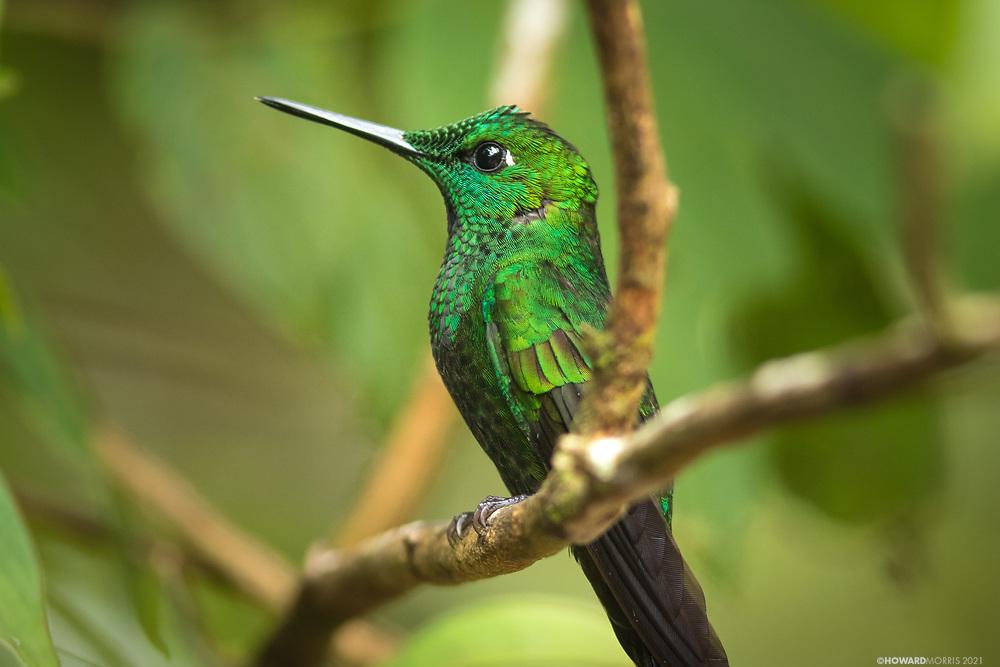 Monteverde, Costa Rica.