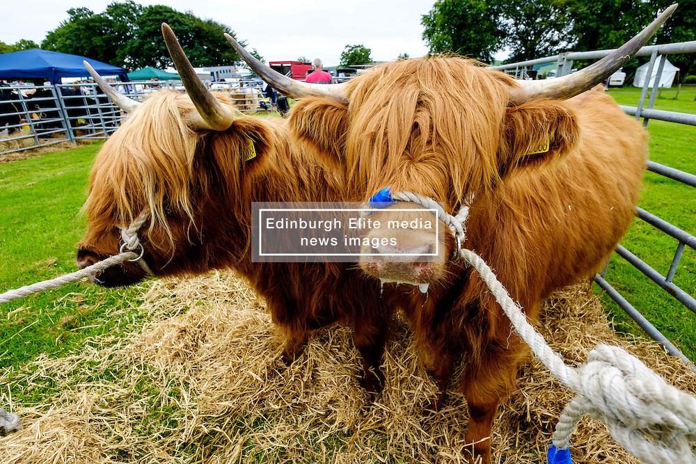 Biggar, South Lanarkshire, Scotland 23 July 2016<br /> <br /> Preparing highland cattle for showing.<br /> <br /> <br /> (c) Andrew Wilson | Edinburgh Elite media