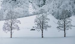 THEMENBILD - Baumreihe in einer unberührten, frisch verschneiten Wiese, aufgenommen am 29. Jänner 2020 in Kaprun, Oesterreich // Row of trees in an untouched, freshly snowed-in meadow, in Kaprun, Austria on 2020/01/29. EXPA Pictures © 2020, PhotoCredit: EXPA/Stefanie Oberhauser