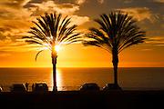 California palm trees sunset silhouette