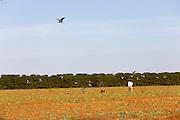 Sao Gotardo_MG, 26 de maio de 2015<br /> <br /> Fotos dos produtores de cenoura na regiao de sao gotardo.<br /> <br /> Foto: MARCUS DESIMONI / NITRO