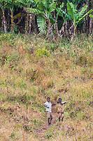 Mozambican boys along a footpath to bananna platations growing on the slopes of Mount Gorongosa, Gorongosa Mountain, Inhambane Province, Mozambique