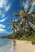 Idyllic tropical landscape with view of a sandy beach with palm trees, Little Corn Island, Nicaragua