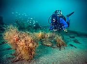 USS Indra Shipwreck, NC