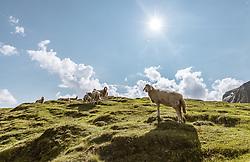 THEMENBILD - Schafe weiden auf Bergweiden auf dem Kitzsteinhorn an einem sonnigen Tag, aufgenommen am 23. August 2018 in Kaprun, Österreich // Sheep graze on mountain pastures on the Kitzsteinhorn on a sunny day, Kaprun, Austria on 2018/08/23. EXPA Pictures © 2018, PhotoCredit: EXPA/ JFK