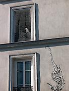 Cat in a window, Paris, France