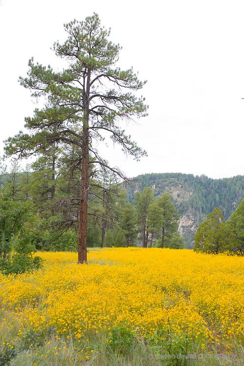 Sedona Woods wildflowers