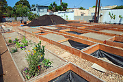 The Venice Community Garden's first planting included Rosemary, Basil, Bell Peppers, Artichokes, and Cherry Tomatoes, 8/11/10. The Venice Garden broke ground in April, 2010. Soil tests revealed high levels of arsenic and lead because of previous uses which included a railroad line going through the lot. Steps were taken which included adding protective layers and adding new soil. Planting began in August and the first harvest was in October, 2010. Venice, California, USA
