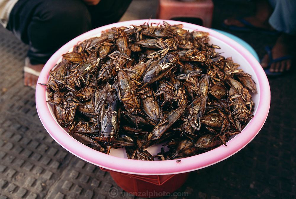 A pink plastic tray of fried cicadas, one of many insect varieties found for sale in Phnom Penh's Central Market, Cambodia. Image from the book project Man Eating Bugs: The Art and Science of Eating Insects.