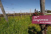Vines pruned for winter in Cordon Royat and a sign saying it is Sangiovese grapes. Bodega Pisano Winery, Progreso, Uruguay, South America
