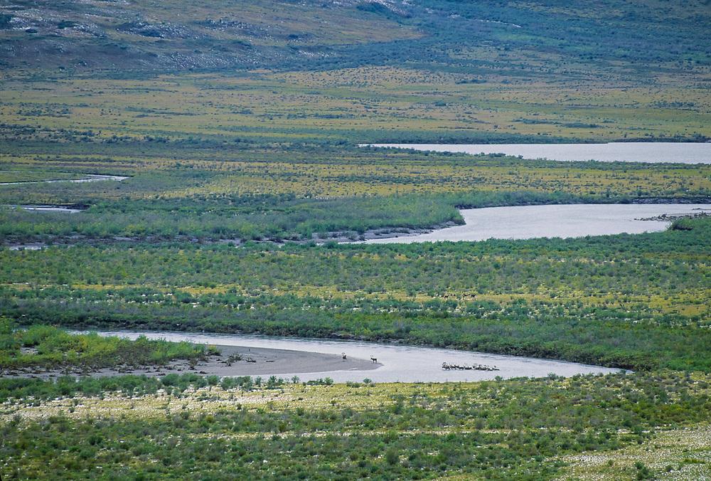 Scale_Caribou crossing the Noatak River, Gates of the Arctic National Park, Alaska, USA