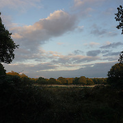 London,England,UK: 26th October 2016: Richmond park, London,UK. Photo by See Li