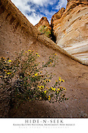 20x30 poster print of unique geology and wildflowers in slot canyon.