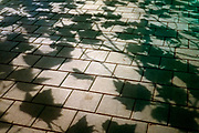 shadow of leaves during night on a tiled sidewalk pavement