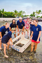 Teacher Marc Rice and his students from Hawaii Preparatory Academy (HPA), capturing a Green Sea Turtle, Chelonia mydas, to be examined at Sea Turtle Research station, organized by researcher George Balazs, PhD, NOAA National Marine Fisheries Service (NMFS), HPA students and teachers (NOAA/HPA Marine Turtle Program), and ReefTeach volunteers at Kaloko-Honokohau National Historical Park, Kona Coast, Big Island, Hawaii, Pacific Ocean.
