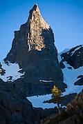The Sharkstooth rock spire with pine tree, Rocky Mountain National Park, Colorado.
