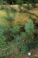 Bal onder een boom; .INSTRUCTIE MET INDER VAN WEERELT. COPYRIGHT KOEN SUYK