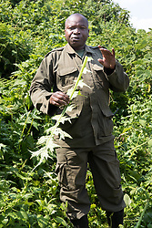 Oliver Showing Plant That Gorilla's Eat