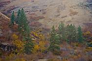 autumn in the Grande Ronde River Canyon, WA, USA