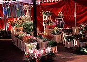 A3A9KD Flower  market stall Ipswich Suffolk England