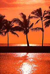 Silhouette of Coconut Palms, Cocos nucifera,`Anaeho`omalu Beach at sunset, Waikoloa, Big Island, Hawaii, Pacific Ocean