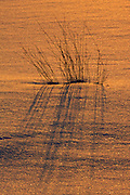 Grasses at sunset<br /> Hope Bay<br /> Ontario<br /> Canada