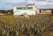 Aloe vera factory shop, Oliva, Fuerteventura, Canary Islands, Spain