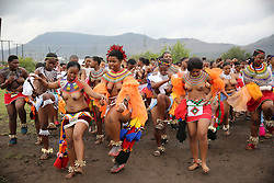 08092018 (Nongoma) A traditionally clad Zulu maiden shouts as she takes part in the mini reed dance (uMkhosi woMhlanga) in the rural district of Emalangeni, some 80kms north of Durban on 08 September 2018<br /> Picture: Motshwari Mofokeng/African News Agency (ANA)