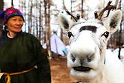 A Tsaatan women with her reindeer, Khovsgol Province, Mongolia