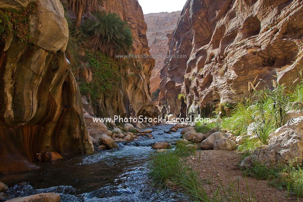 Wadi Zered (Wadi Hassa or Hasa) in western Jordan. A sand stone canyon with frash running water