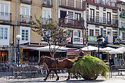 Farmer drives horse and cart full of hay through Laredo, Cantabria, Spain
