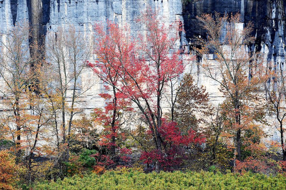 Fall color and Roark Bluff, Buffalo National River, Arkansas.