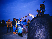 Barrow villagers pulling slabs of whale skin and blubber for Muktuk off Barrow's second Bowhead Whale strike for the fall season, Barrow, Alaska.