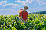 The son of Francois Seconde, the next generation winemaker, in the vineyard with a machine carried on the back used for spraying sulphur (the yellow powder) on the vines to protect them from disease Champagne Francois Seconde, Sillery Grand Cru, Montagne de Reims, Champagne, Marne, Ardennes, France