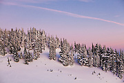 Trees along a ridge in winter glow in the twilight above Paradise, Mount Rainier National Park, Washington.
