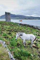 Horse near Kildownet Castle, Achill Island, County Mayo, Ireland